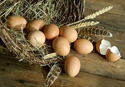Nicht alle Eier in einemn Korb legen